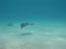 Vakantiefoto's Bonaire